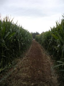 Sun. Sept. 24th Open to the Public @ Diana's Pumpkin Patch & Corn Maze